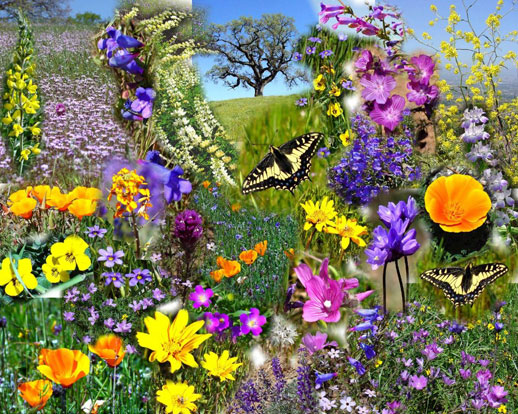 Spring Flowers & Insects Collage